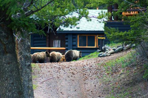 3-bears-gallery