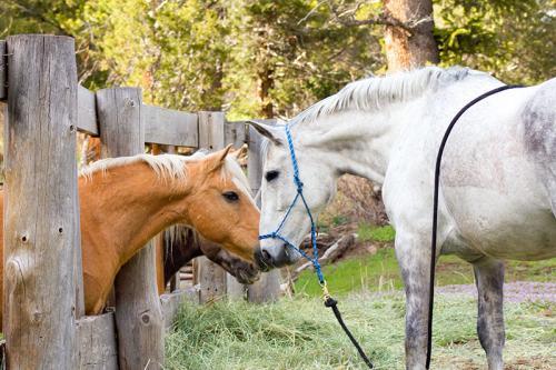 horse-friends