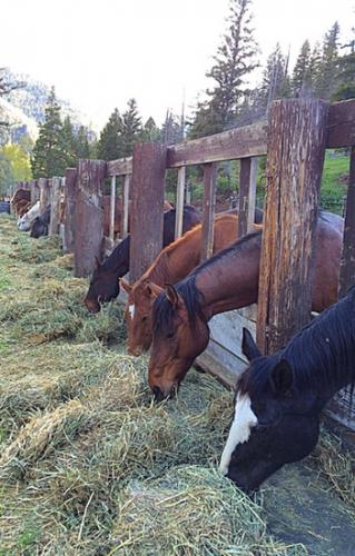 horsehay